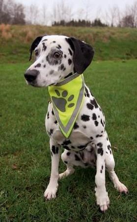 Odblaskowa bandana dla psa - rozmiar L-XL