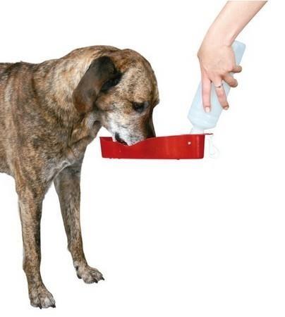 Bidon, butelka z miską na wodę dla psa - 250 ml