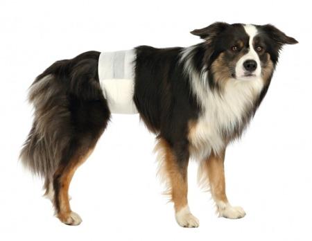 Pieluchy dla psa samca 12 sztuk